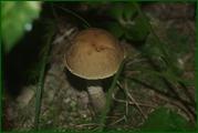 http://img-fotki.yandex.ru/get/9067/15842935.37f/0_eabc4_70aae99d_orig.jpg
