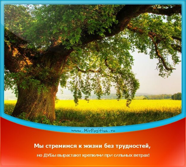 позитивчик: Мы стремимся к жизни без трудностей, но ДУБы вырастают крепкими при сильных ветрах!