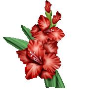 гладиолус аромашарм
