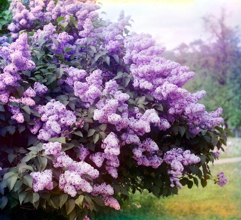 30редких цветных фотографий Российской империи 100 иболее лет назад 0 12fc27 d18364b5 orig
