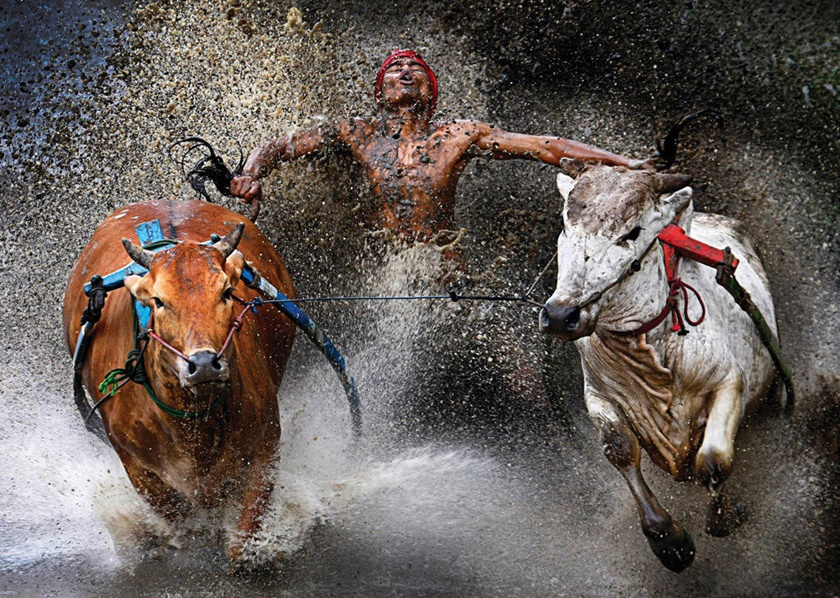 Победители фотоконкурса World Press Photo 2013 0 141ba3 721f9699 orig