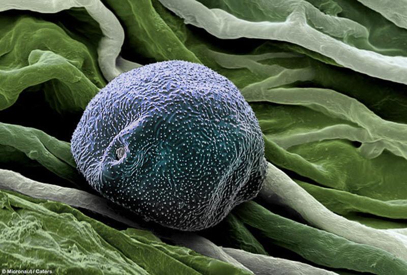 4. Пыльца березы. Пыльца березы осыпается в период между мартом и маем, так что в апреле аллергикам
