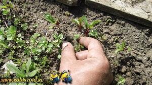 меры борьбы с сорняками