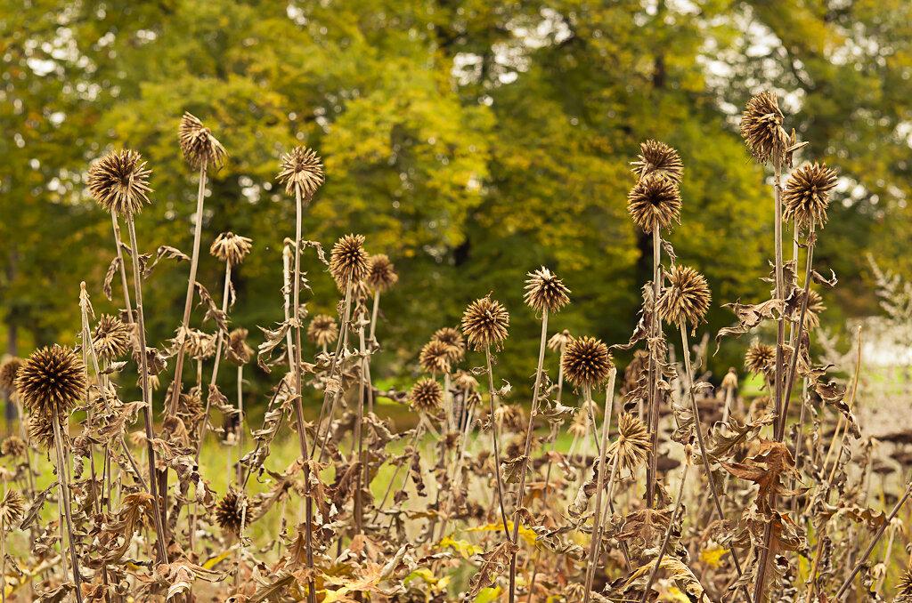Осень пришла ботаничекский сад Пальменгартен