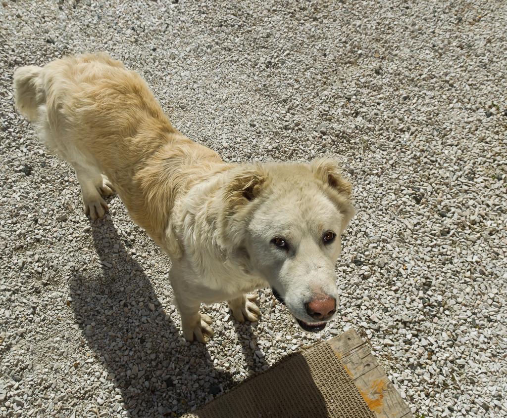 Фотография 7. Собака-улыбака. Отзыв о поездке на курорт Шерегеш летом.
