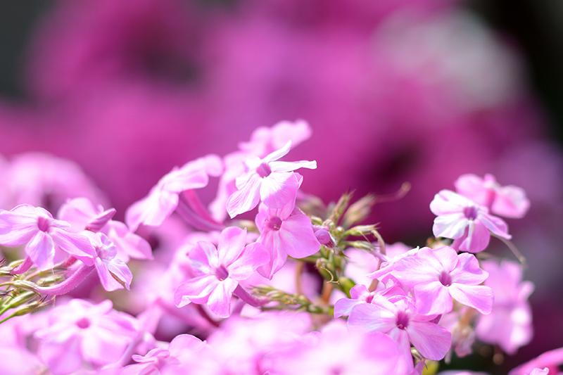 цветочное 21 16.jpg