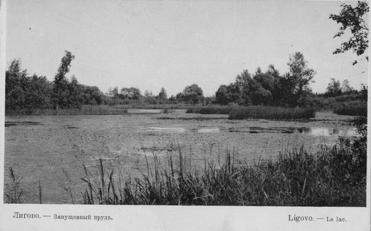 Запущенный пруд