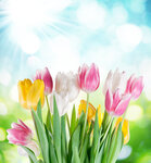 Tulips (1).jpg
