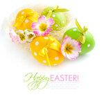 Eggs (5).jpg