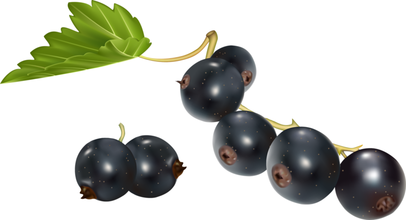 фрукты (2).png