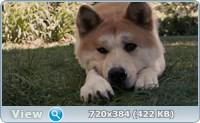 Хатико: Самый верный друг / Hachi: A Dog's Tale (2008/HDRip/BDRip)