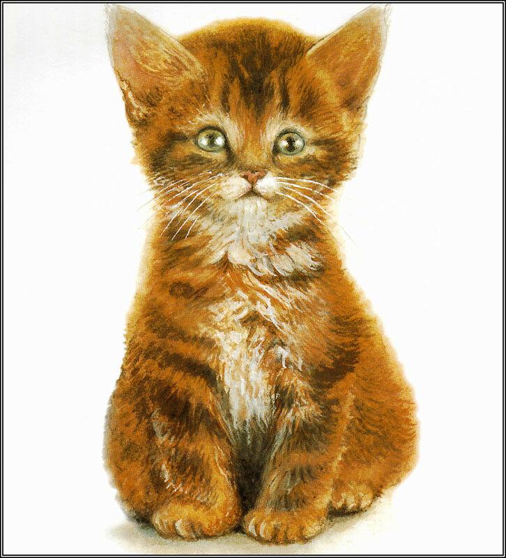 Картинки с изображением кошки для детского сада