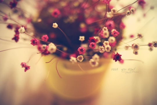 Beautiful Flowers Photography