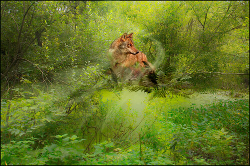 У лесного болота