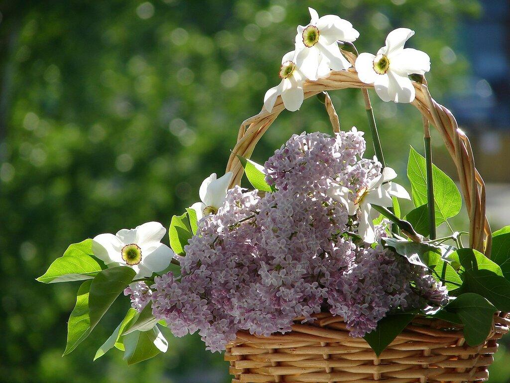 У весны характер нежный, Ведь весна -улыбка года!