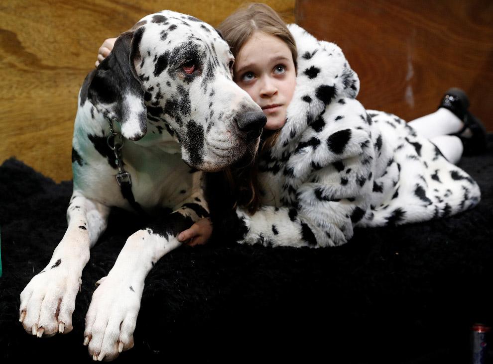 HD Англия собаки