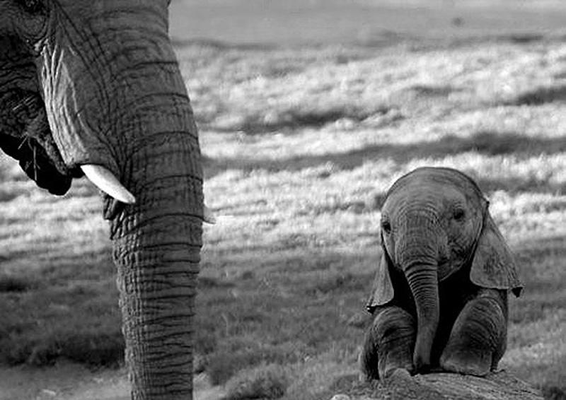 детеныши зоопарк малыши умильные