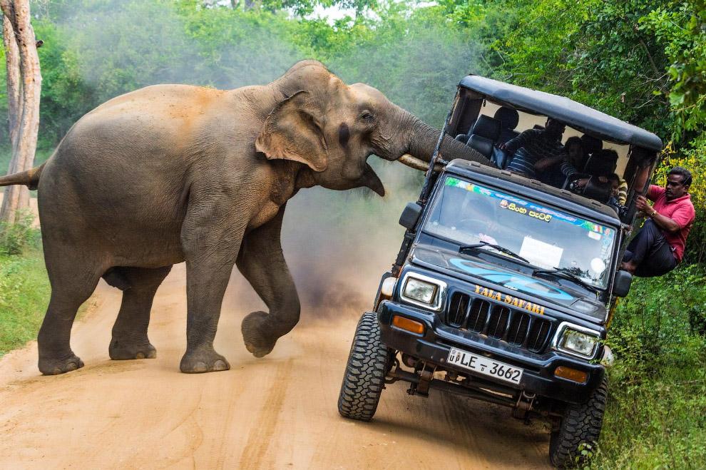 HD В мире самое интересное животные Фотография фотограф интересное