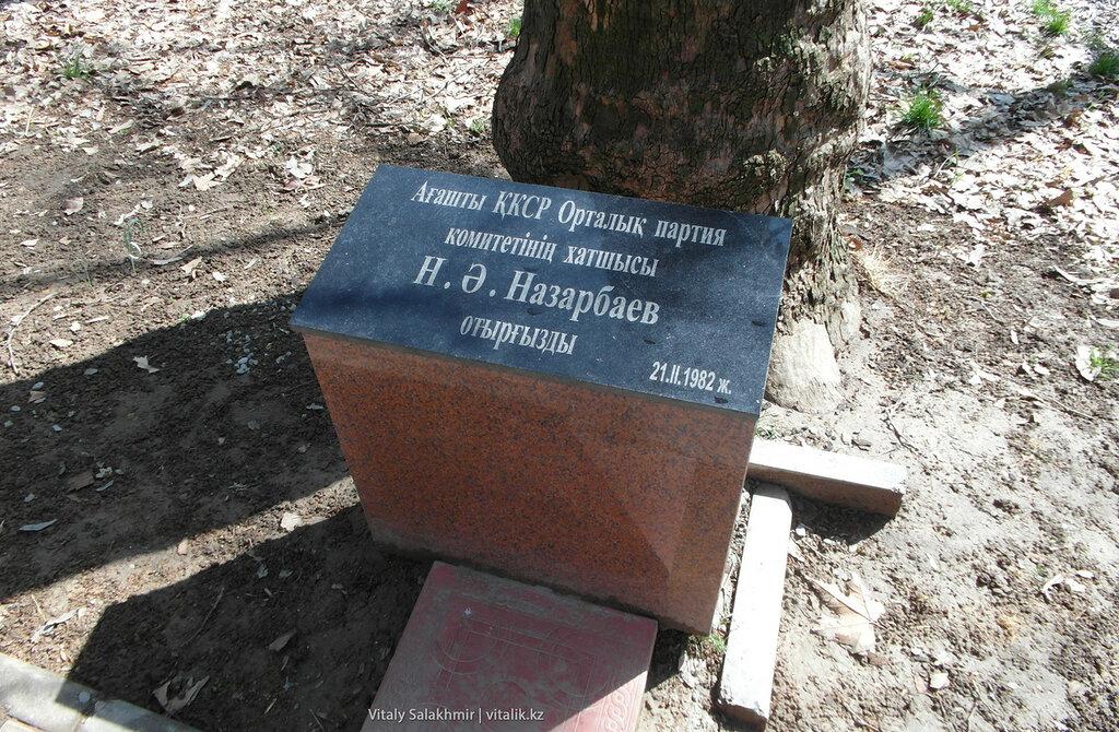 Дерево, посаженое Назарбаевым, дендропарк Шымкента