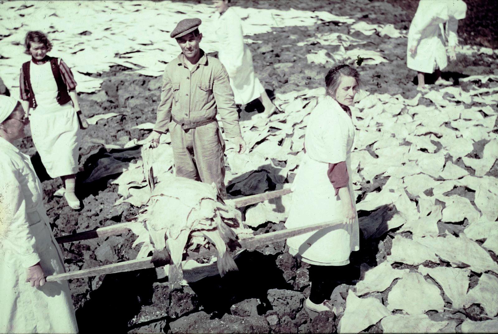 Мужчина и женщины собирают рыбу