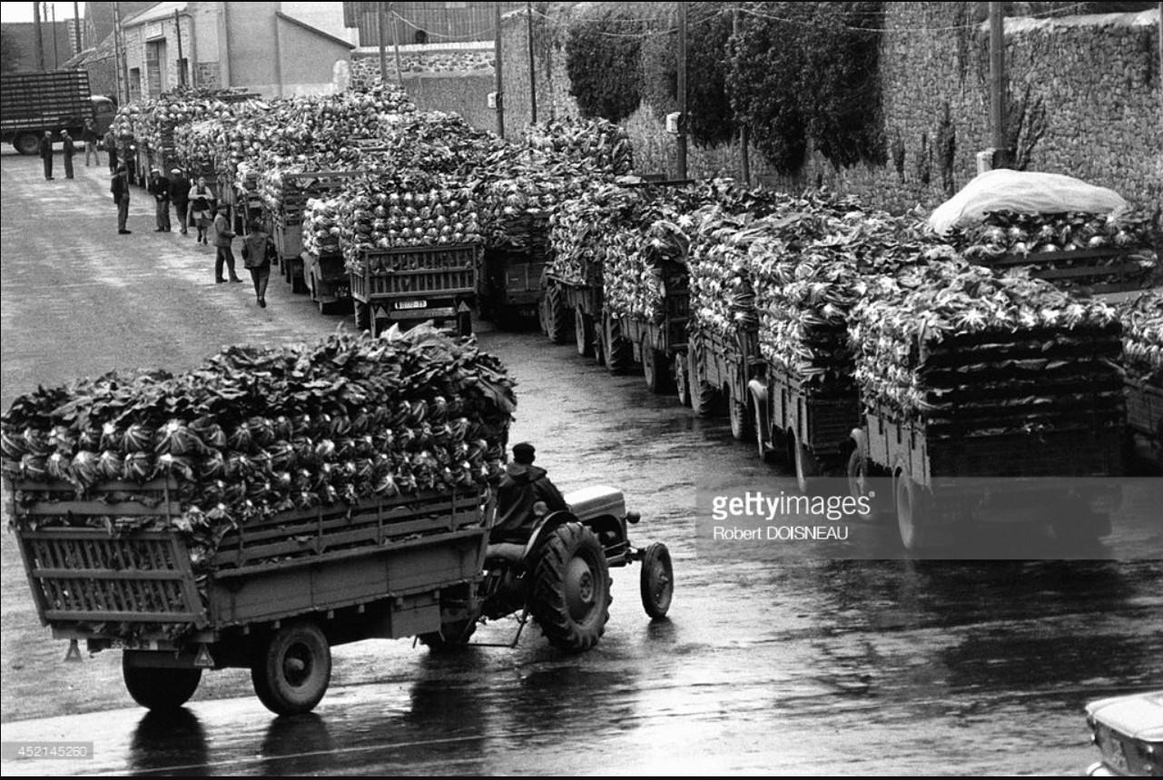 1964. Грузовые перевозки цветной капусты, Бретань, Сен-Поль-де-Леон