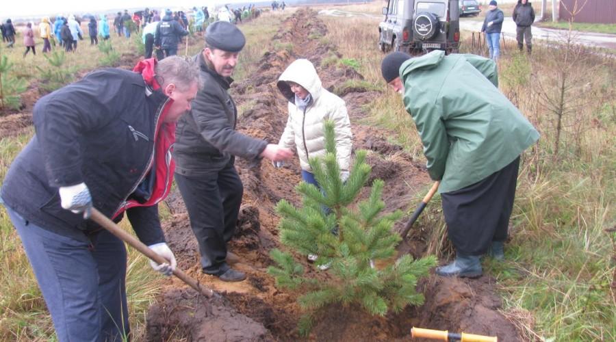 В 2017 году в Калужской области посажено более 788 тысяч саженцев деревьев