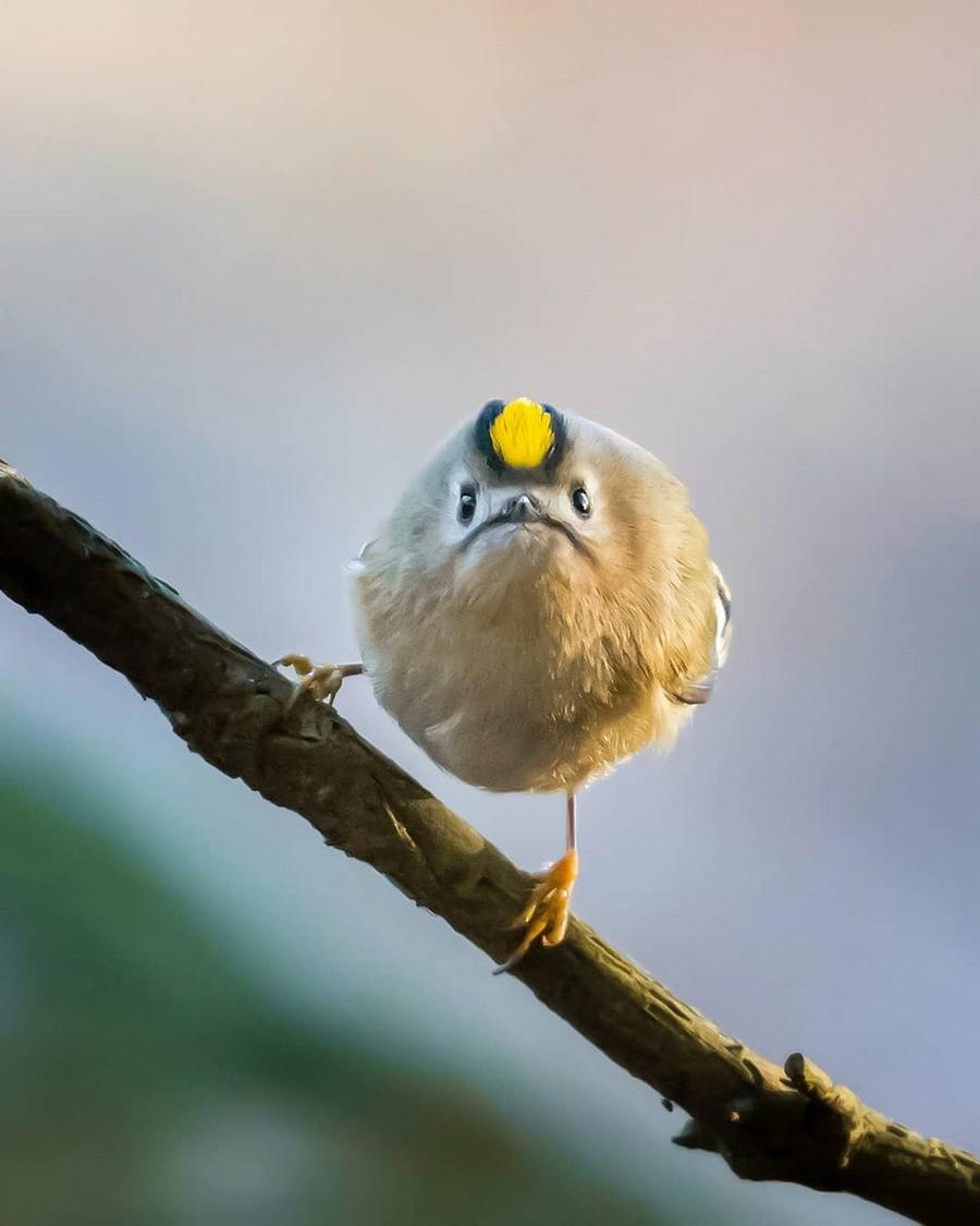 смешные птички фото фотосессии