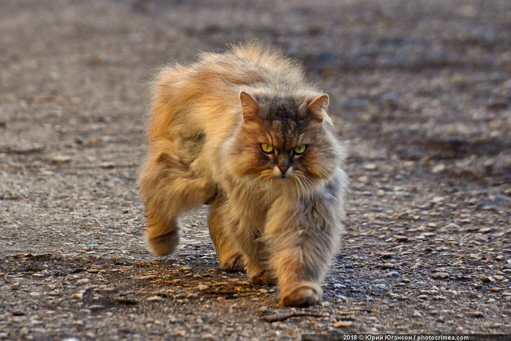 Кошки Крыма и Севастополя