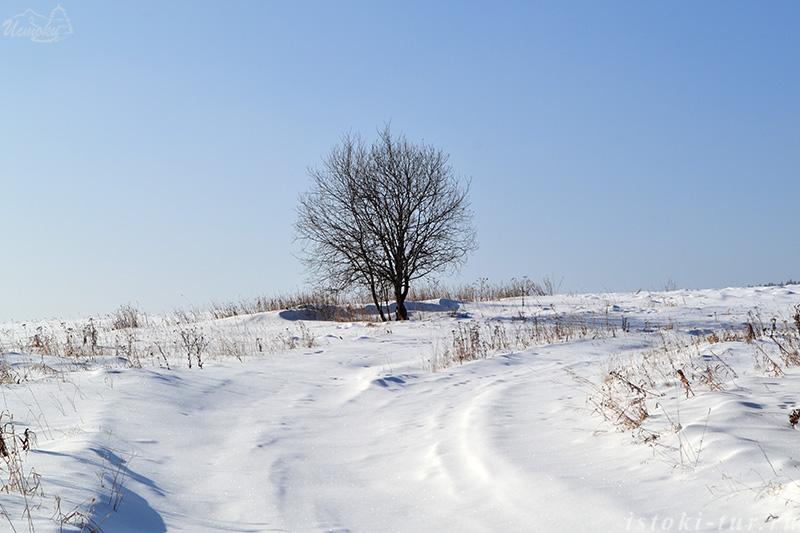 дерево_в_поле_derevo_v_pole