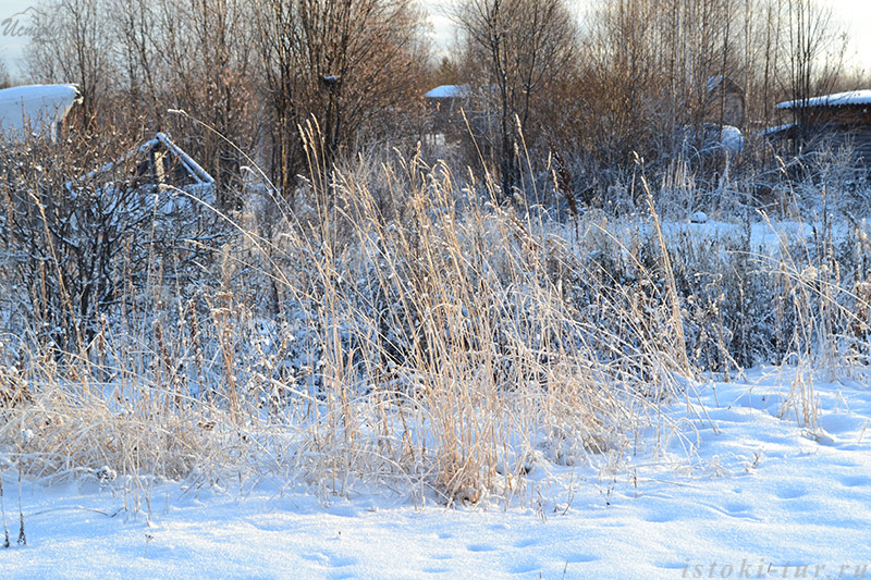 зимняя_трава_zimnjaja_trava