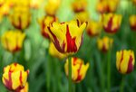 Весенний фестиваль цветов..jpg