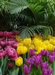 репетиция весны_красивое сочетание.jpg