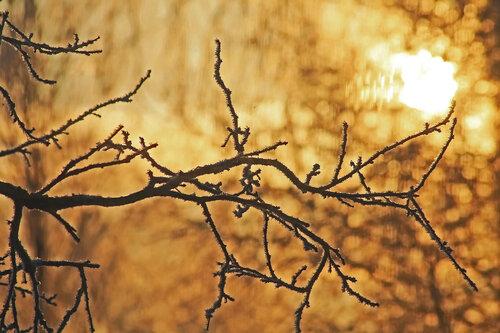 золотая зима