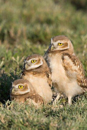 owls06.jpg