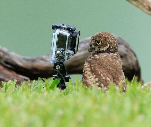 owls12.jpg
