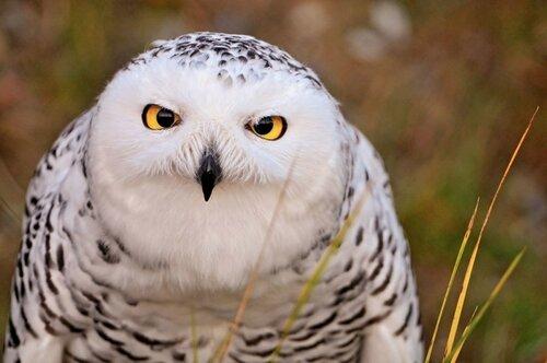 owls16.jpg