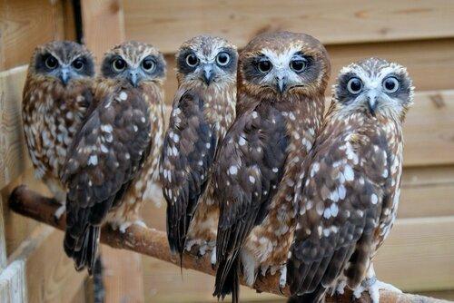 owls21.jpg