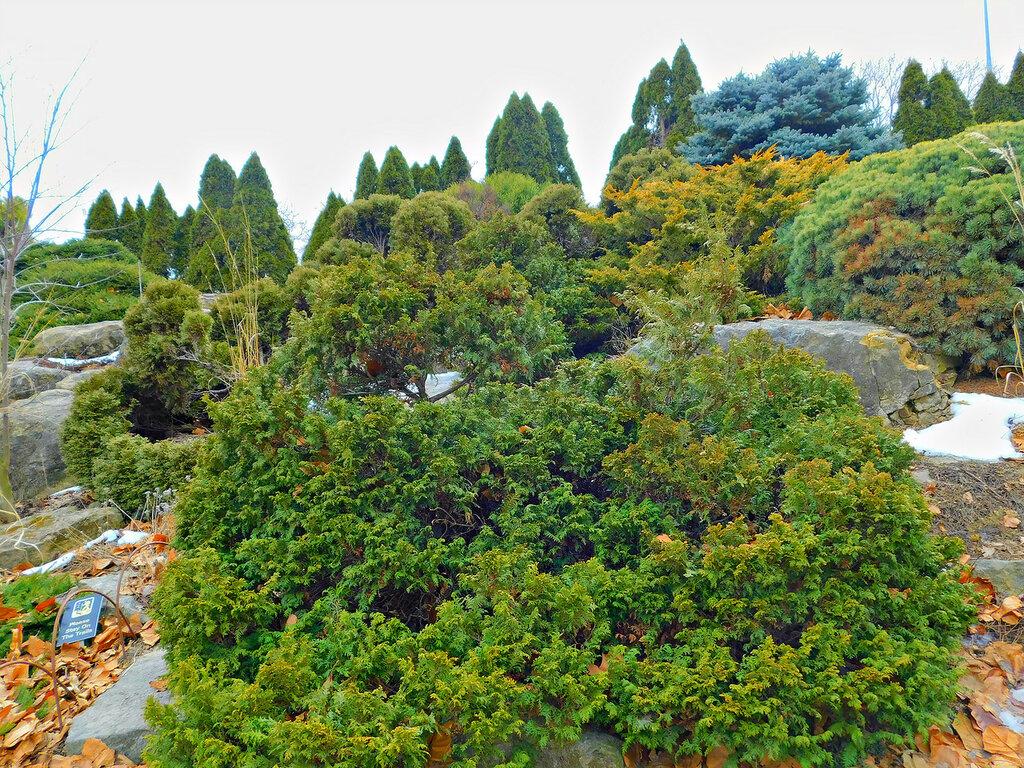 Ботанический сад Олбрич.