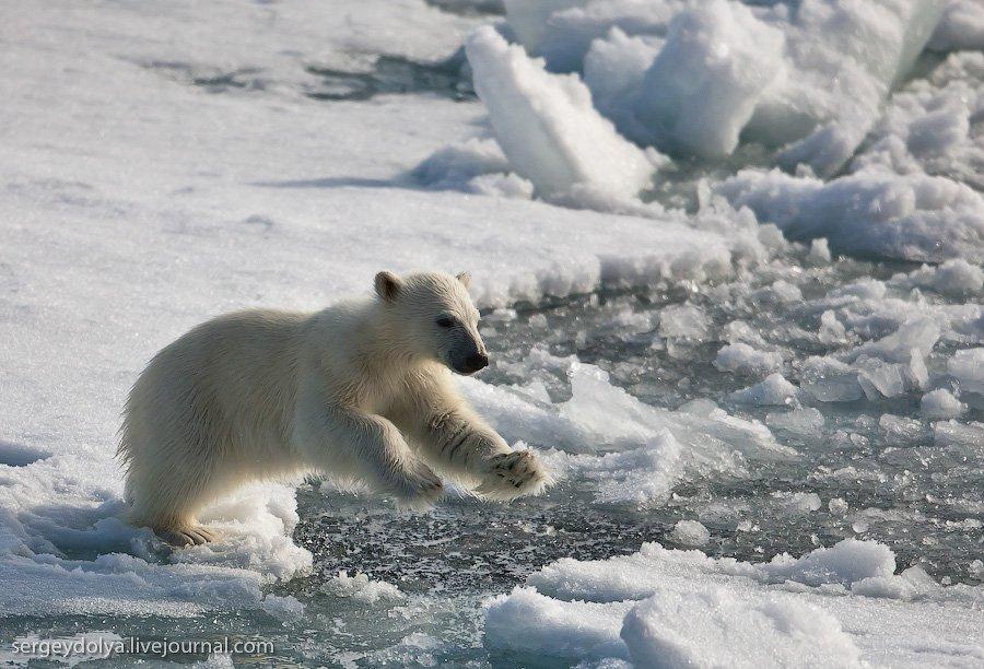 Путешествие на Северный полюс. Часть 2