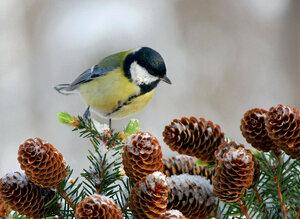 Птичка- синичка