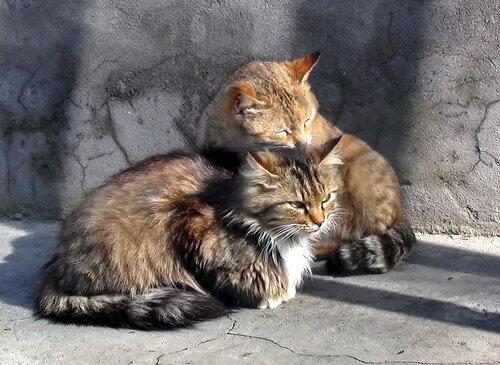 Кошачья дружба
