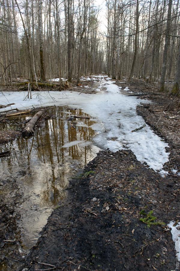 лесная тропинка во льду