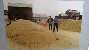 Вот столько зерна выращивали в колхозе имени Ильича.