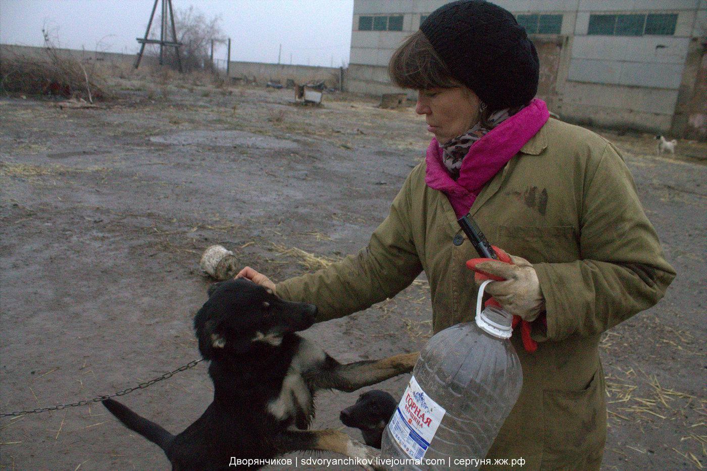 Приют для животных ПО Великое междуречье - Волжский - 16-12-2017