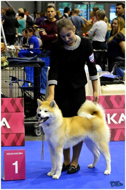 Акита -Акацуки Ямато - Юный Чемпион Европы.jpg