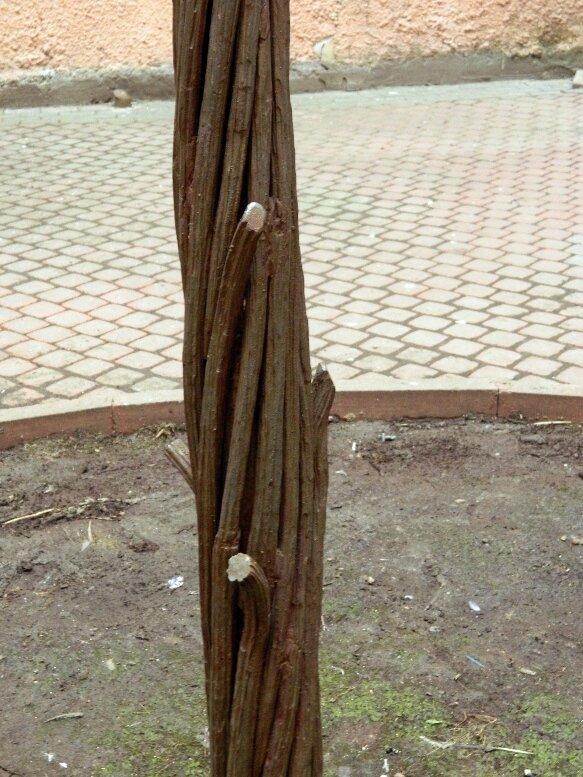 Железное дерево во дворе-колодце