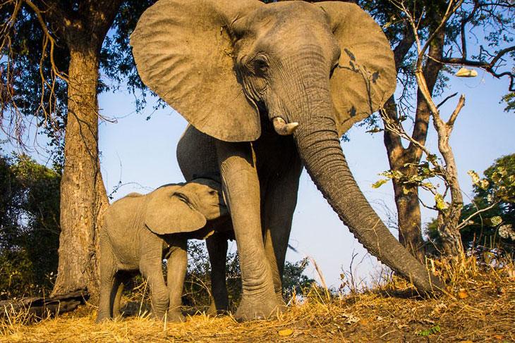 Уилл — так зовут фотографа — родом из Лондона. Съемками занимался в Замбии в течение года.