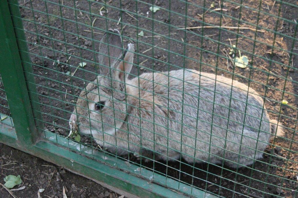 Кролик мусолил капустный листок