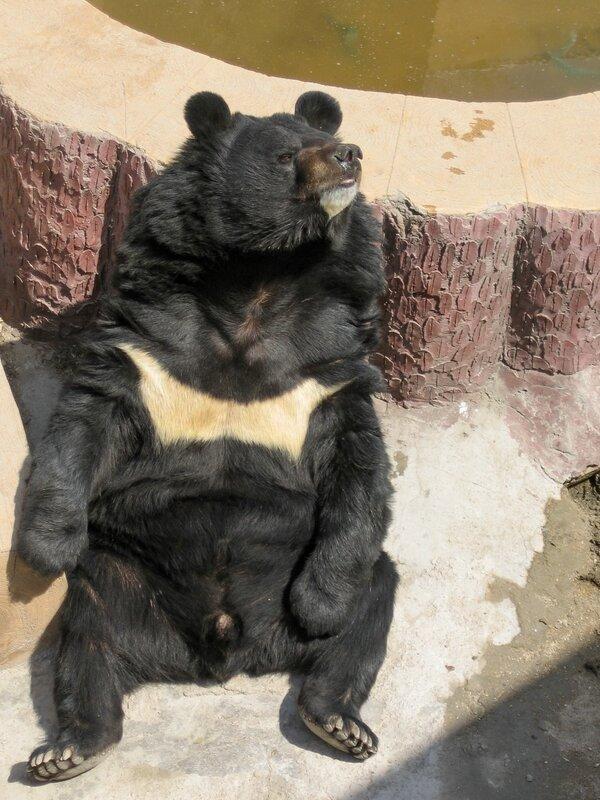 Мишка отдыхает, Великая китайская стена, Бадалин