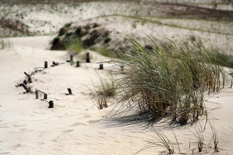Балтийские дюны